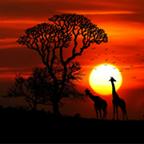 kenyan outback at sunset