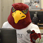 Raider Bird working in an office