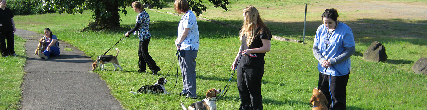veterinary technician students outside with dogs on leashes